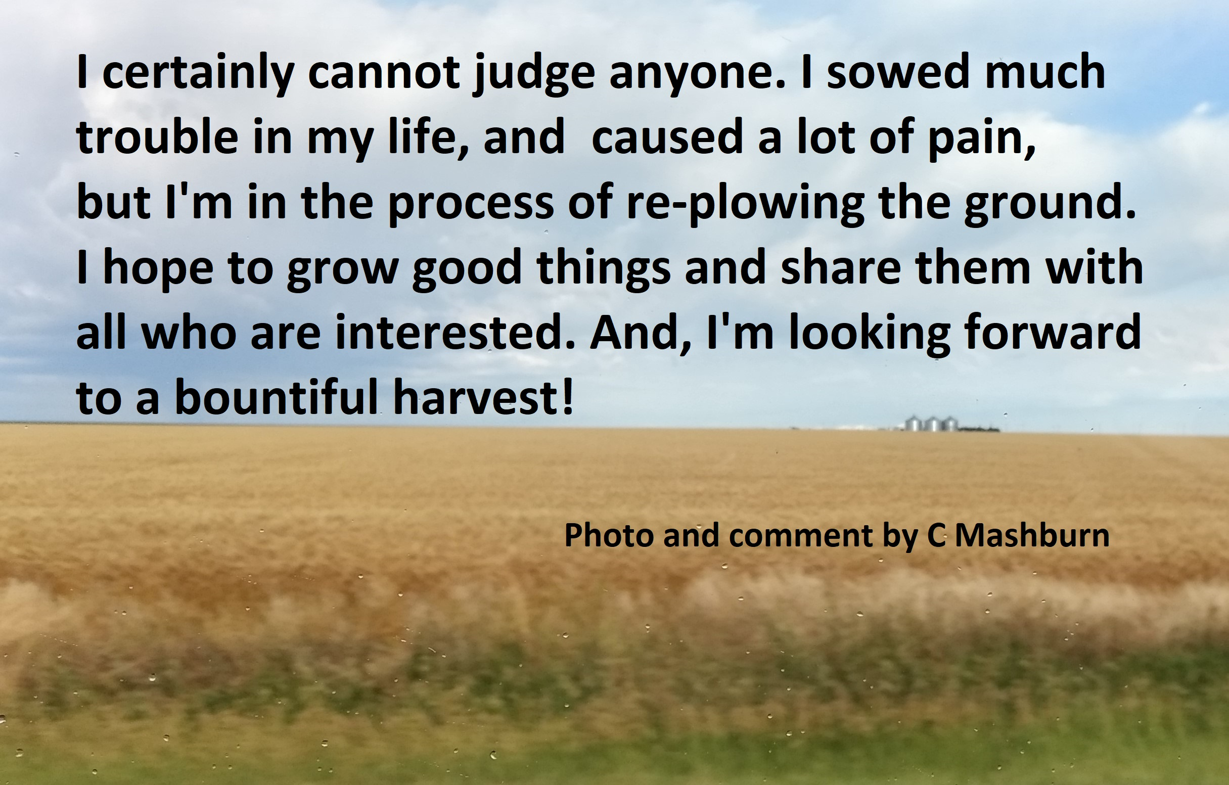Kansas wheat field (4)