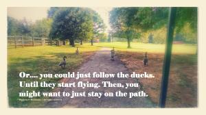 ducks on the path