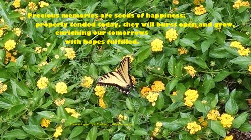 butterfly on lantana - hopes fulfilled