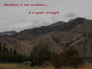 Cashmere ~ Quiet strength