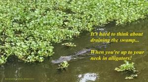 Huntsville SP gator quote
