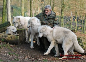 2-man-lives-with-wolves