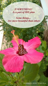 butterfly-on-hibiscus-10-25-2016-quote