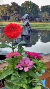 flowers and birdhouse