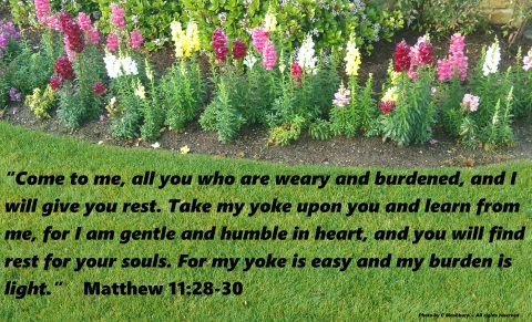 flowers & grass 3-10-17 quote