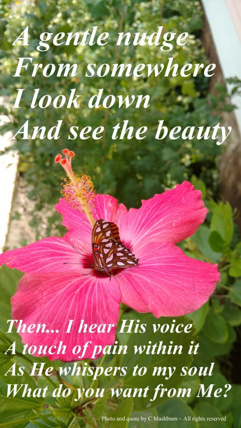 butterfly on hibiscus 10-25-2016 quote