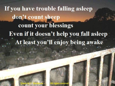 sheep - falling asleep