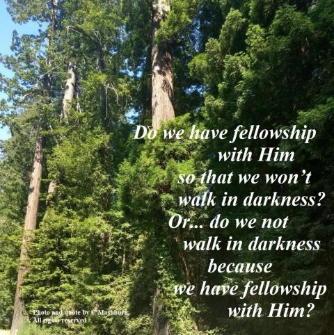 sunlight trees 2 (2) quote