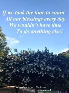 Tulip trees quote