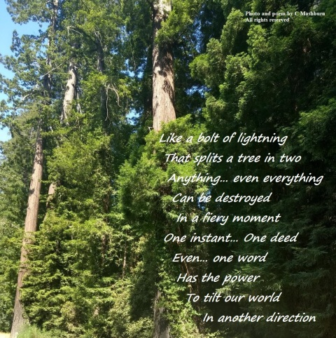 sunlight trees 3 poem