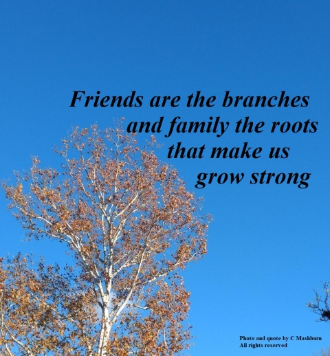 neighbor's tree (2) quote