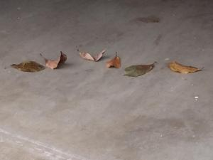 leaves in the garage